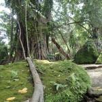 ドゥマゲテの人気観光地レイクバラナンのジップライン動画