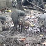 ドゥマゲッティのレアもの動物園 シリマンズーに行ってみた