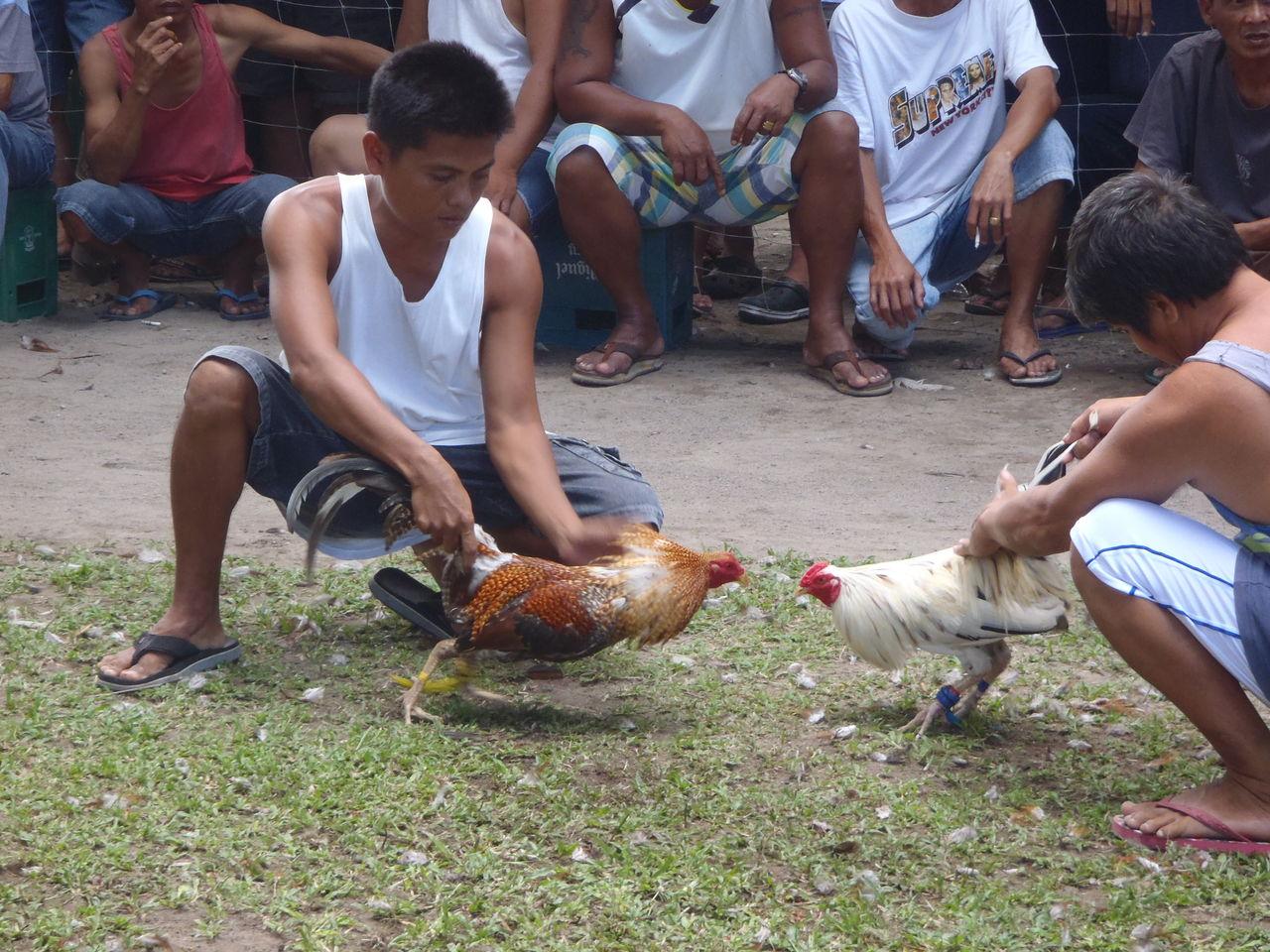 ドゥマゲッティ最大の娯楽闘鶏 男達と鶏たちの真剣勝負