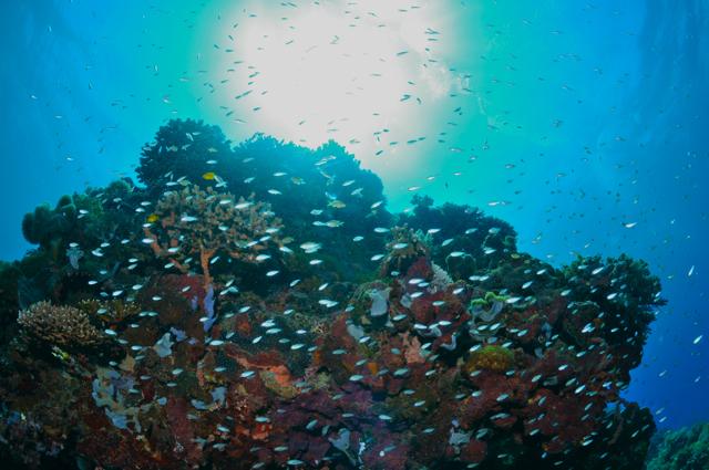 ドゥマゲッティの海の中の素晴らしいハーモニー