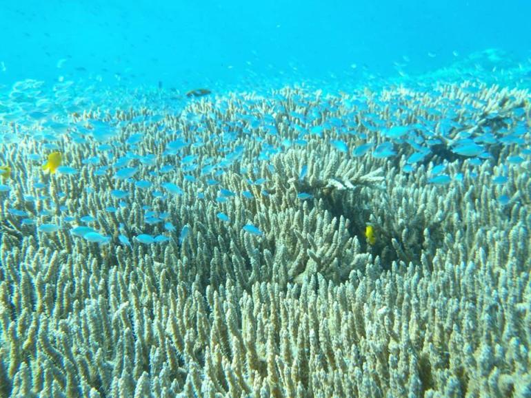 ドゥマゲッティの海をもっと知ってもらおうプロジェクト