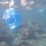 ドゥマゲッティの海の悲惨な現状 海亀は知っている