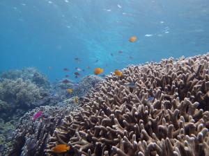 スミロン島のサンゴ礁