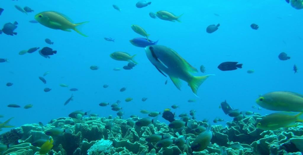 snorkeling_dauin_top