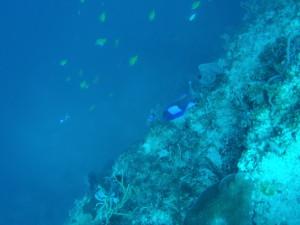 シキホール島の海1