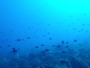 アリグアイ島3