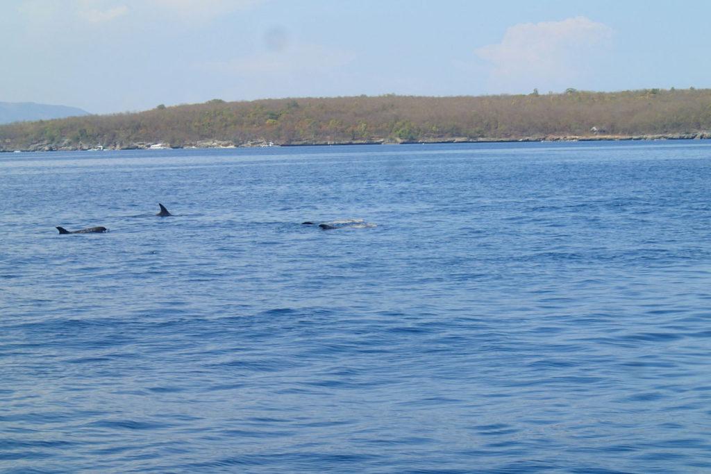 スミロン島のイルカの群れ