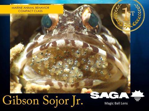 フィリピン水中写真、水中生物の行動写真賞最優秀写真