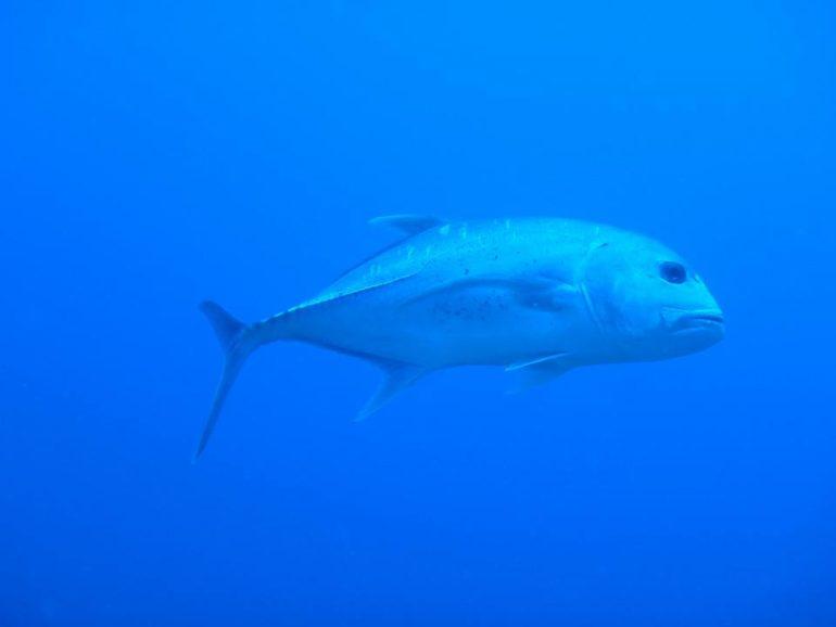 スミロン島ダイビング大物たちとの出会い
