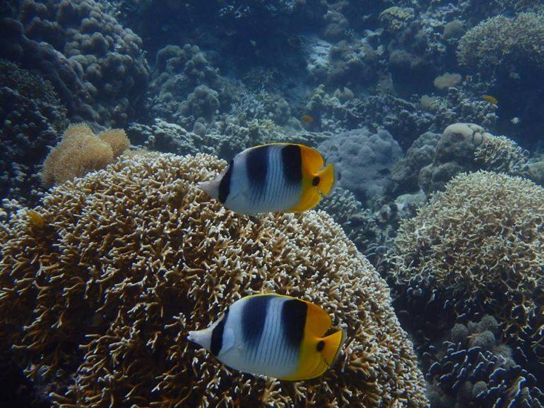 ダイビングで見たい魚、生物リクエストいつでもお受けいたします