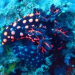 水中生物の斬新な色合いや模様に魅せられる