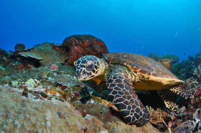 アポ島の穏やかなウミガメ