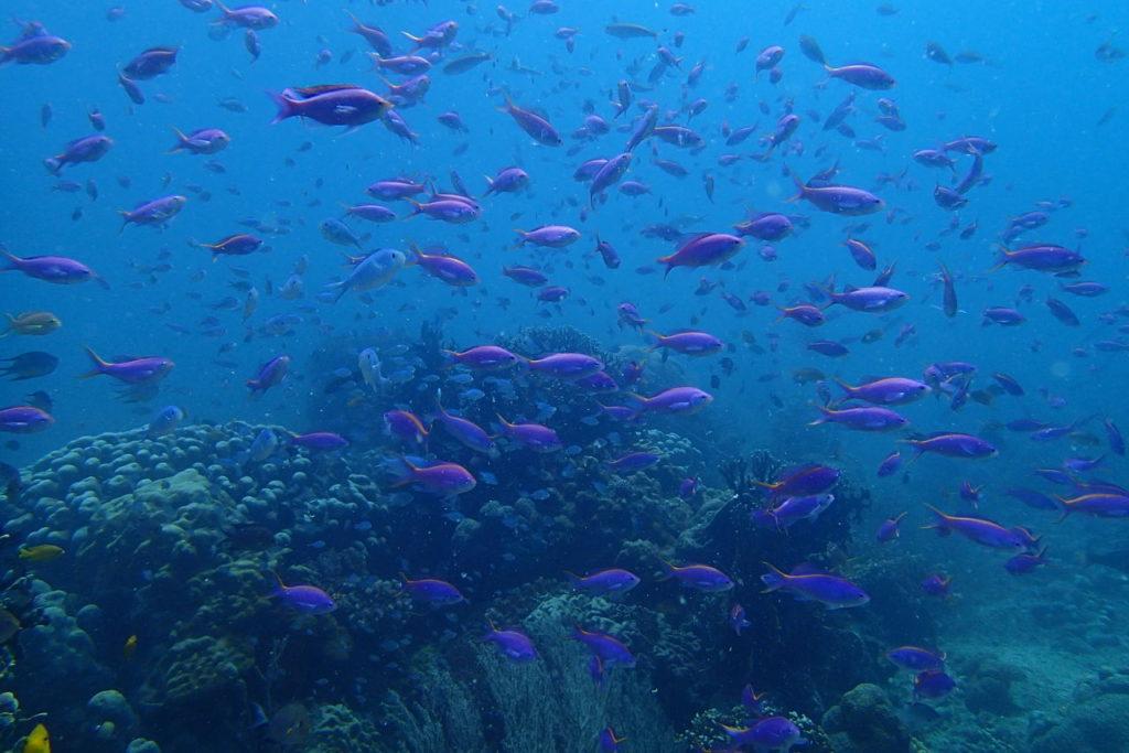 魚影が濃いアムランビオオス海洋保護地区
