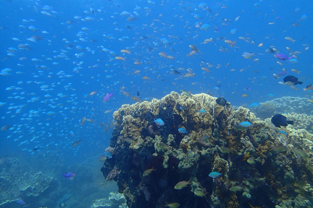アムランのビオオス海洋保護地区