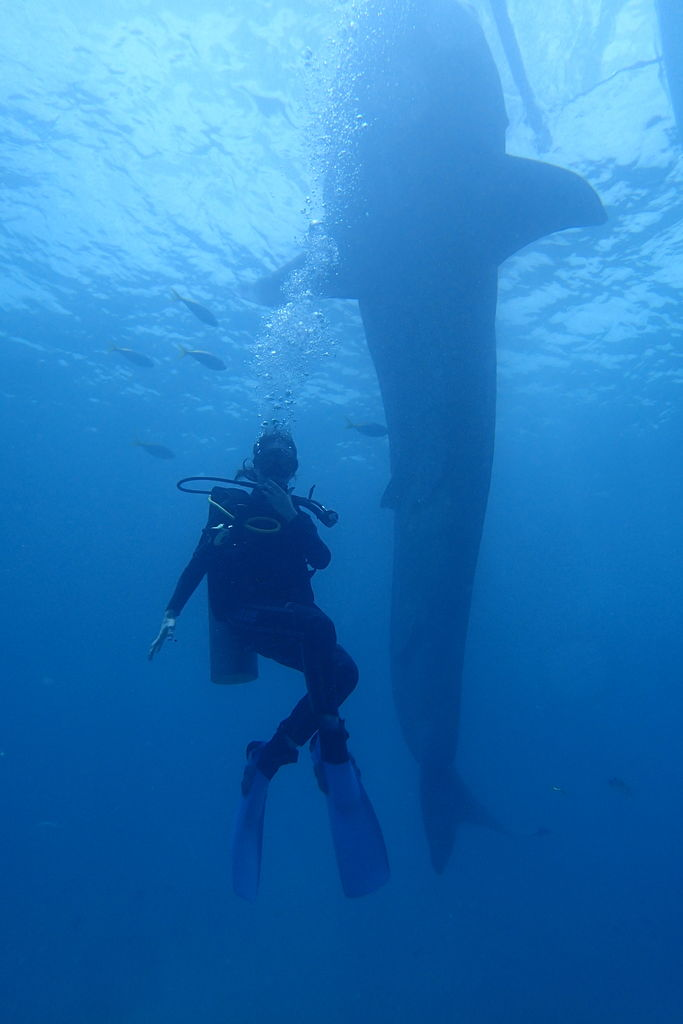 何故ドゥマゲッティ、アポ島ダイビングは日本人には有名ではないのか?