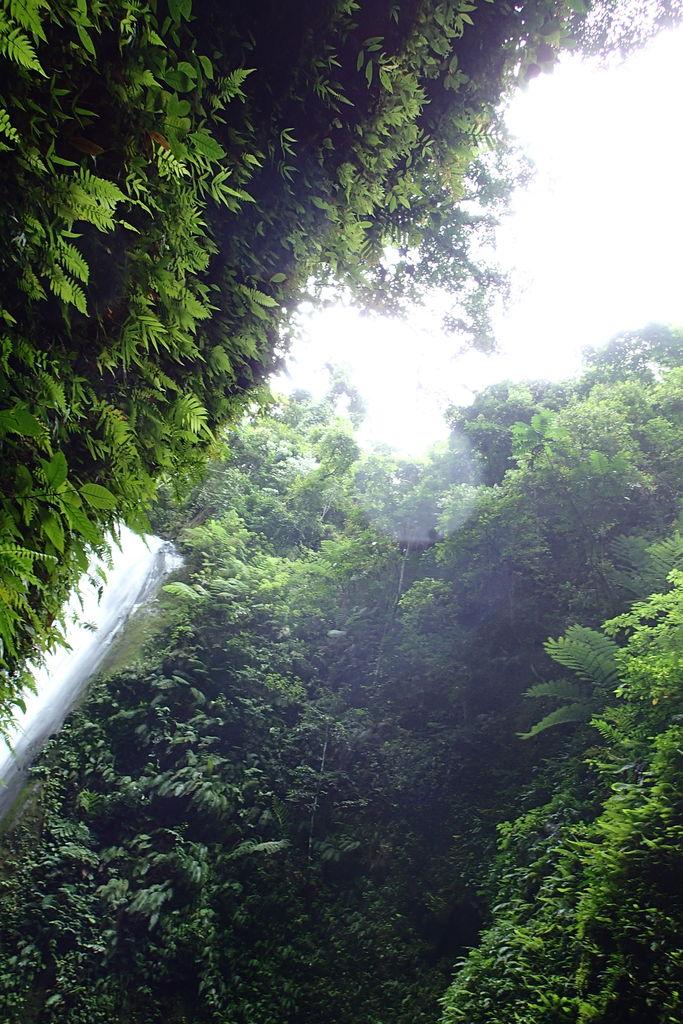 マイナスイオンたっぷりの滝