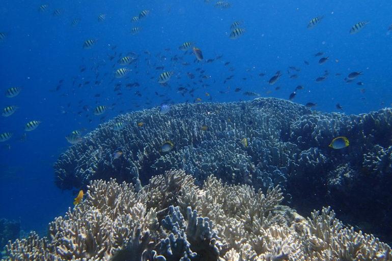 アポ島は珊瑚と生物の宝庫