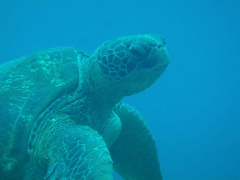 マニラ在住の人に是非来て欲しいアポ島の魅力