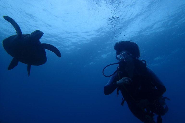 ドゥマゲッティだったら体験ダイビングでも海がめに出会える