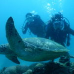 アポ島で海がめダイビング動画