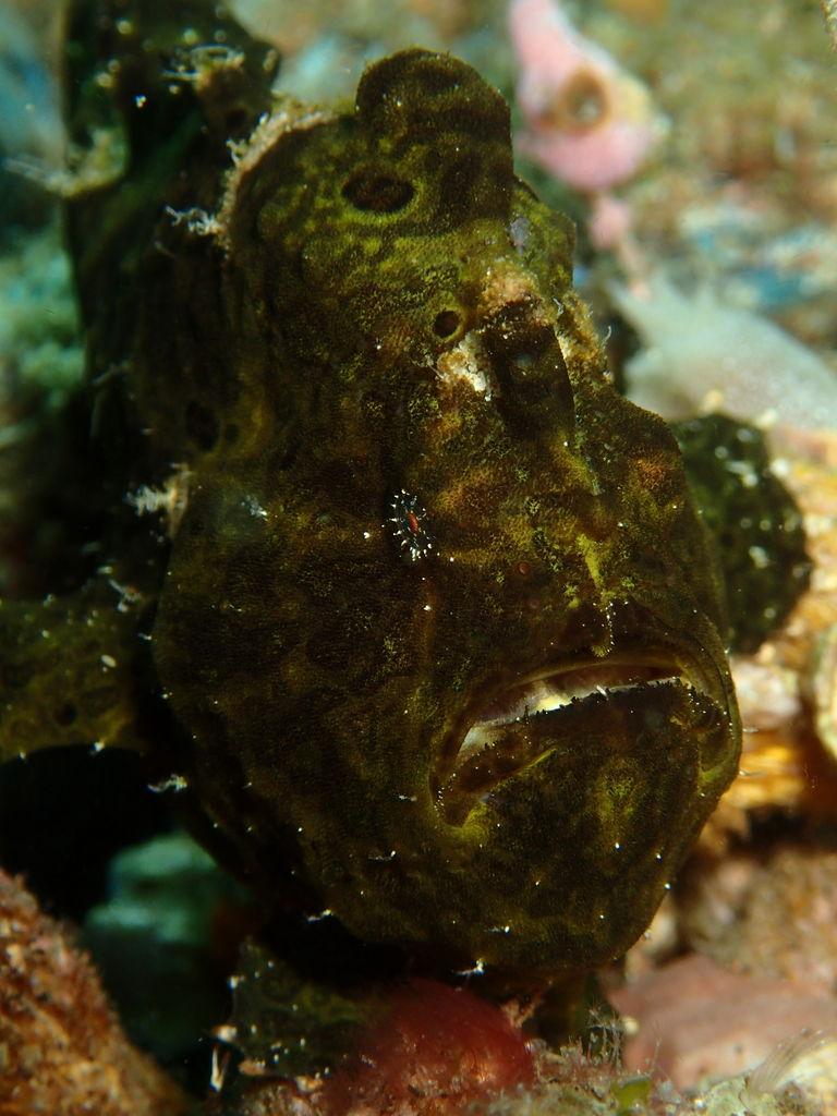 ドゥマゲッティ近海でレア水中生物を探す