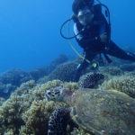 最新のアポ島ダイビング&シュノーケリング情報