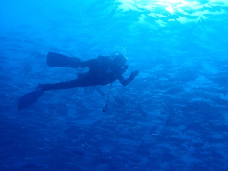 アポ島のギンガメアジの大群と写真を撮る