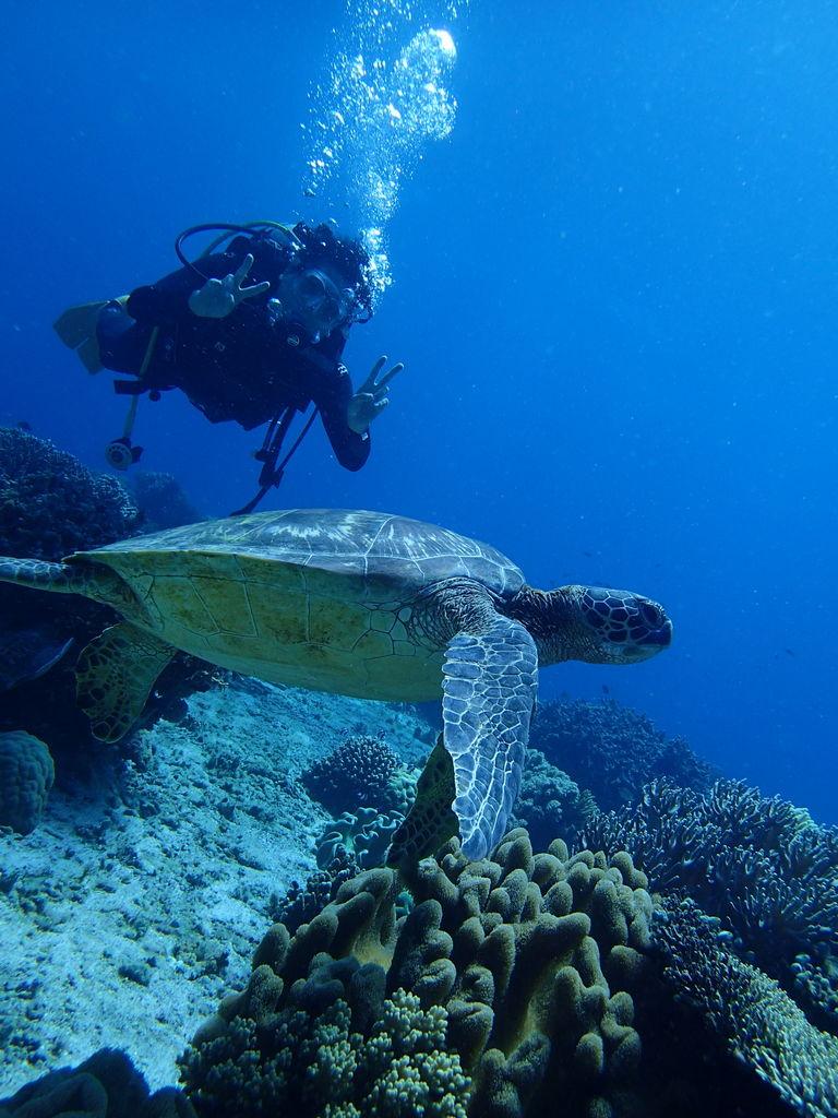アポ島とウミガメ(海亀)