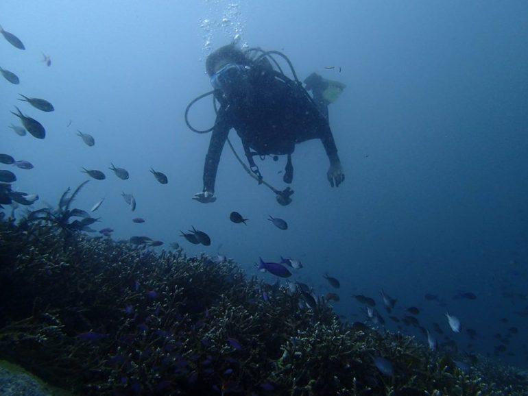 ダイビングライセンスを取得しより広い世界を体験する