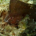 変で面白い水中生物の宝庫ドゥマゲッティ