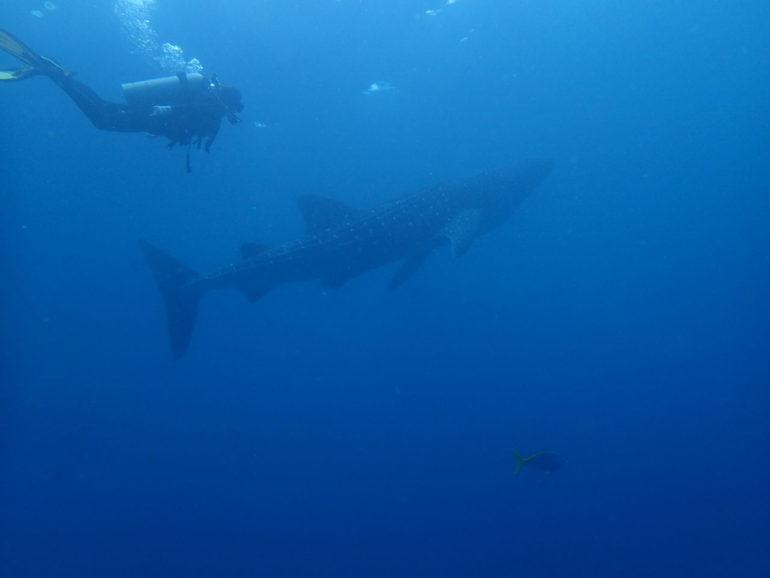 ドゥマゲッティからジンベイザメに癒されるツアー