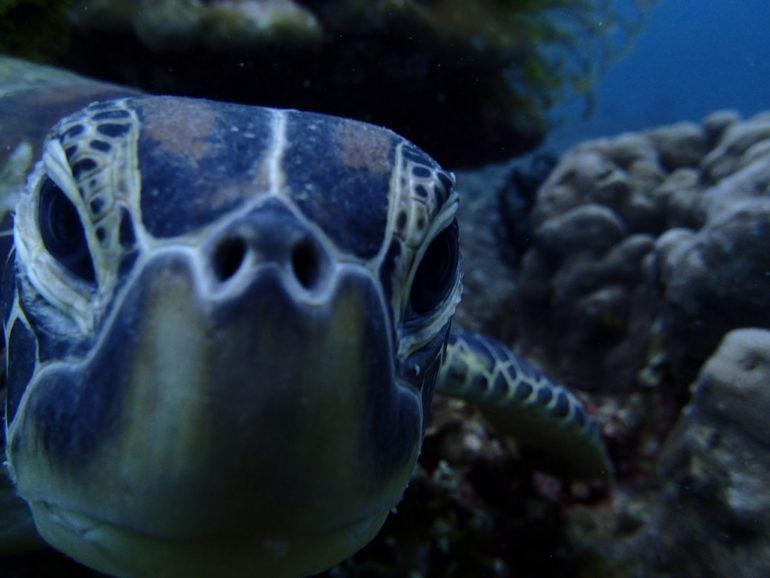 いつでも潜れ、いつでも出掛けたくなるドゥマゲッティの海